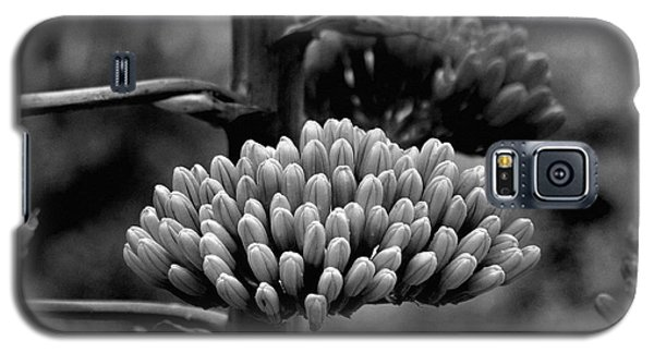 Galaxy S5 Case featuring the photograph Agave Buds by Vicki Pelham