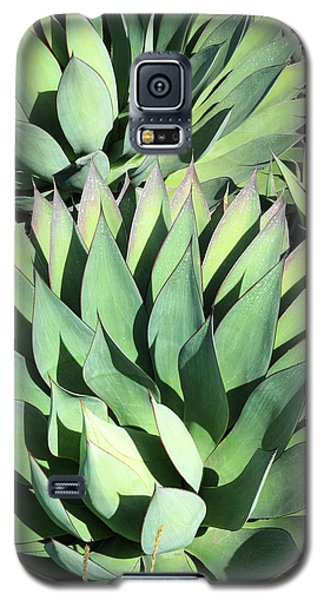 Galaxy S5 Case featuring the photograph Agave by Catherine Lau
