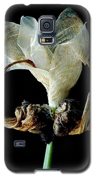Aging Curl Galaxy S5 Case by Art Shimamura