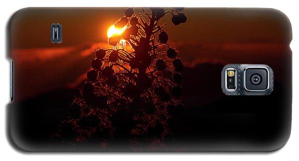 Galaxy S5 Case featuring the photograph Ahinahina - Silversword - Argyroxiphium Sandwicense - Sunrise by Sharon Mau
