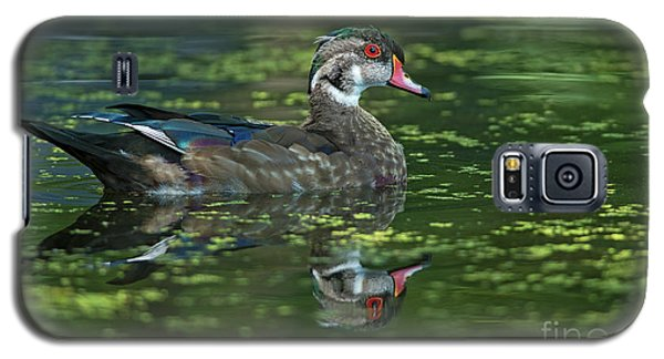 Galaxy S5 Case featuring the photograph Aix Sponsa.. by Nina Stavlund
