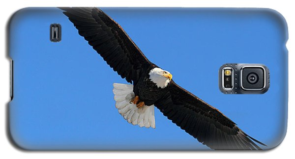 Alaska Bald Eagle Galaxy S5 Case