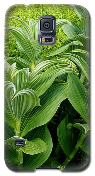 Alaskan Field Foliage Galaxy S5 Case