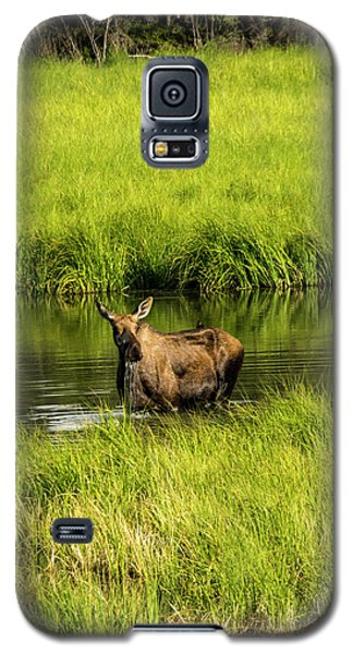 Alaskan Moose Galaxy S5 Case