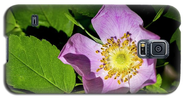 Galaxy S5 Case featuring the photograph Alberta Wild Rose Opens For Early Sun by Darcy Michaelchuk