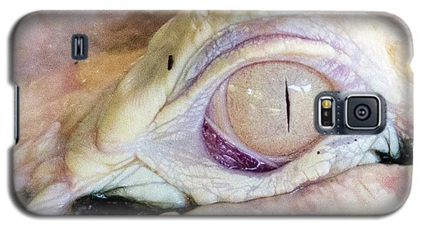 Albino Alligator Galaxy S5 Case