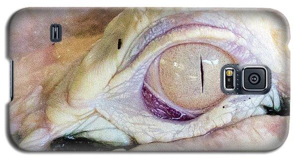 Albino Alligator Galaxy S5 Case