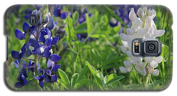 Albino And Blue Bluebonnet Galaxy S5 Case by Robyn Stacey