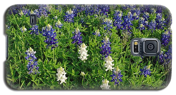 Albino And Bluebonnet Field Galaxy S5 Case by Robyn Stacey