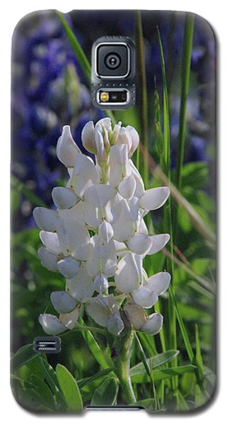 Albino Bluebonnet Galaxy S5 Case by Robyn Stacey