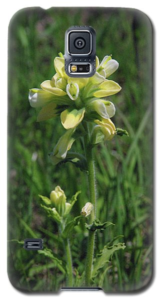 Albino Texas Paintbrush Galaxy S5 Case by Robyn Stacey