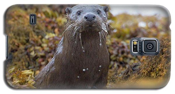 Alert Female Otter Galaxy S5 Case