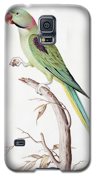 Alexandrine Parakeet Galaxy S5 Case by Nicolas Robert