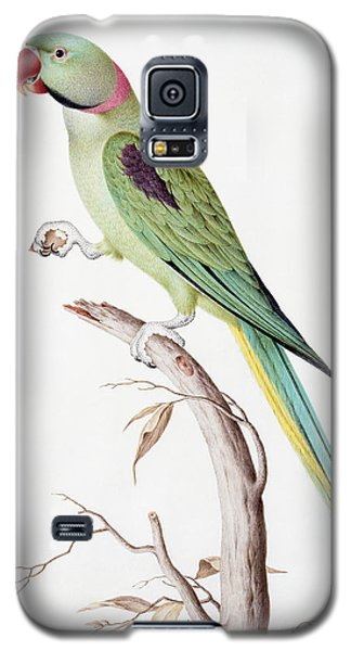 Parakeet Galaxy S5 Case - Alexandrine Parakeet by Nicolas Robert