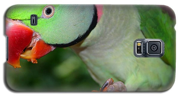 Alexandrine Parrot Feeding Galaxy S5 Case by Ralph A  Ledergerber-Photography