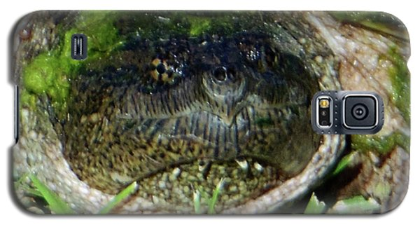 Galaxy S5 Case featuring the photograph Algae Face Common Snapper by Rockin Docks Deluxephotos