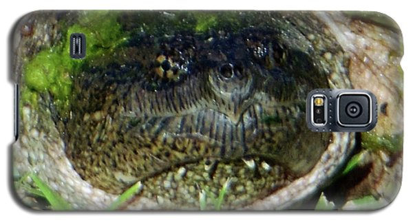 Algae Face Common Snapper Galaxy S5 Case