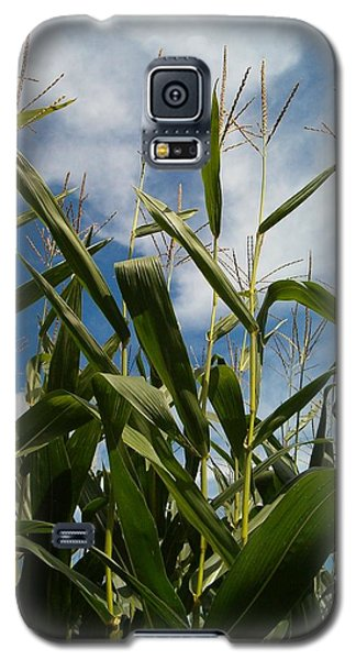 All About Corn Galaxy S5 Case by Sara  Raber