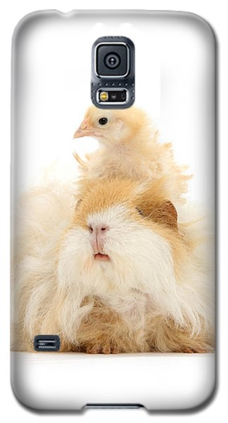 All Frizzed Up And Ready To Go Galaxy S5 Case