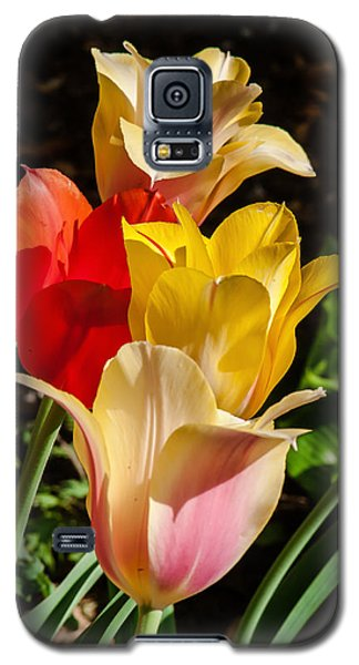 All In A Pretty Row Galaxy S5 Case by Jim Moore