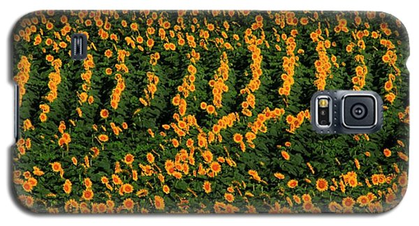 Galaxy S5 Case featuring the photograph All In A Row by Chris Berry