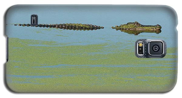 Galaxy S5 Case featuring the photograph Alligator  by Carolyn Dalessandro