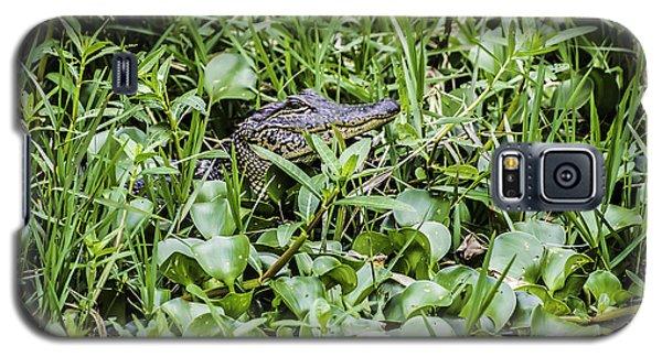 Alligator In Duck Weed, Louisiana Galaxy S5 Case