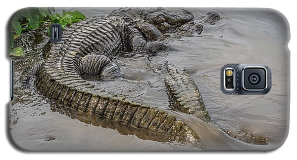 Alligators Courting Galaxy S5 Case