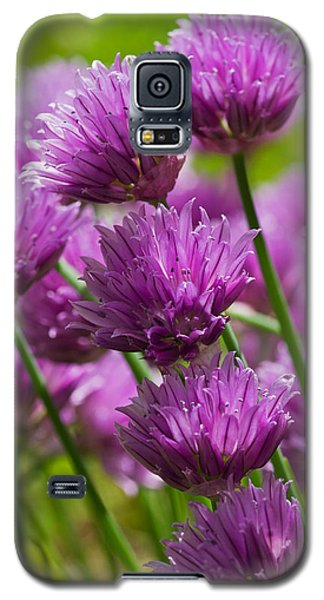 Allium Blooms Galaxy S5 Case