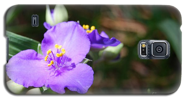 Alone In The Garden Galaxy S5 Case by Linda Mesibov