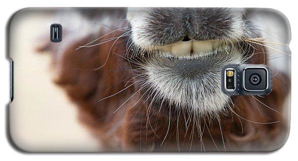 Alpaca #1 Galaxy S5 Case