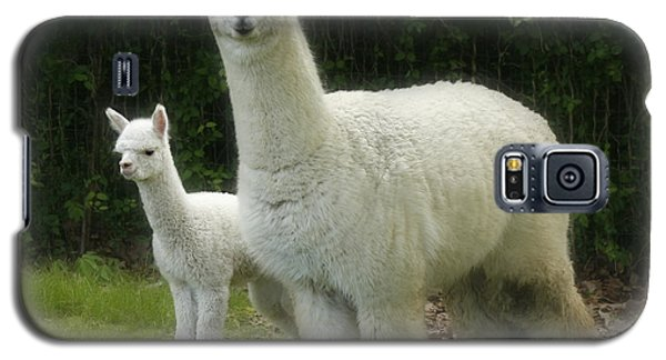 Alpaca And Foal Galaxy S5 Case