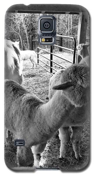 Alpaca Meeting  Galaxy S5 Case