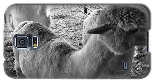 Alpaca Meeting  Galaxy S5 Case