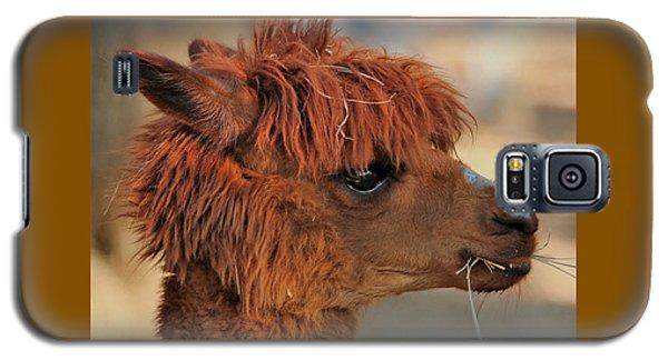 Alpaca Portrait Galaxy S5 Case