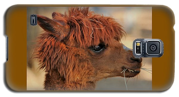 Alpaca Portrait Galaxy S5 Case