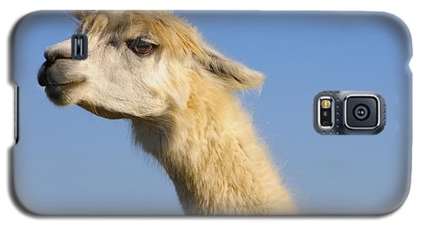 Galaxy S5 Case featuring the photograph Alpaca by Skip Hunt