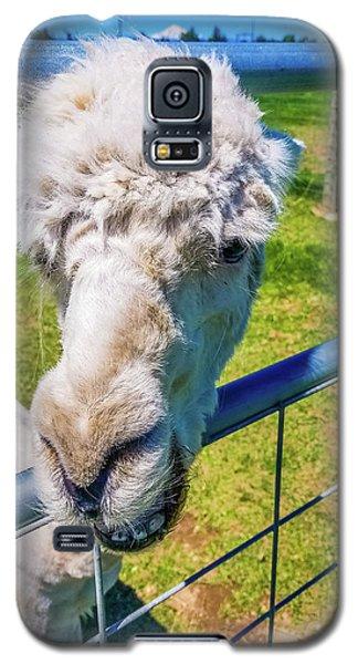 Alpaca Yeah Galaxy S5 Case