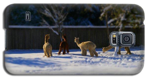Alpacas In The Snow Galaxy S5 Case