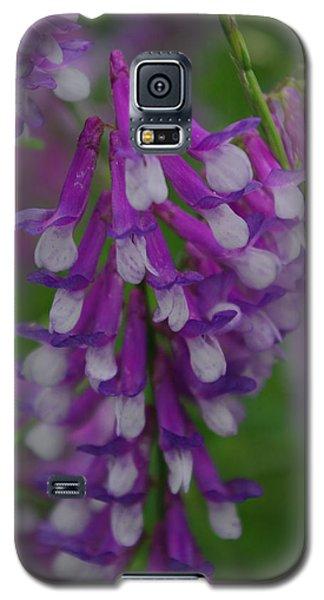 Alpine Vetch 2 Galaxy S5 Case