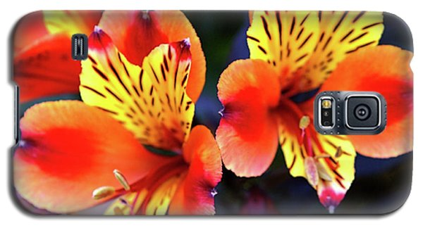 Galaxy S5 Case featuring the photograph Alstroemeria Indian Summer by Baggieoldboy