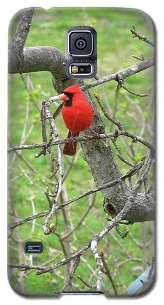 Always With Us -cardinals Galaxy S5 Case
