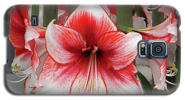 Amarilis Close-up Galaxy S5 Case