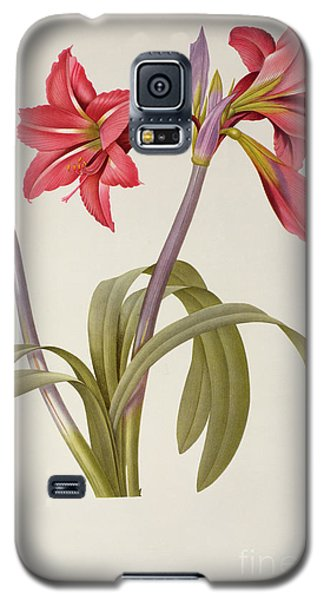 Amaryllis Brasiliensis Galaxy S5 Case by Pierre Redoute