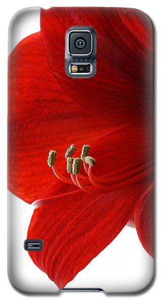 Amaryllis On White 3 Galaxy S5 Case