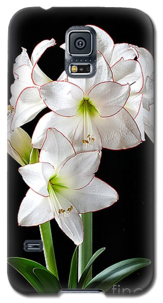 Amaryllis 'picotee' Galaxy S5 Case