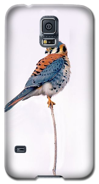 Amercian Kestrel Galaxy S5 Case