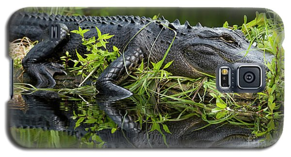 American Alligator In The Wild Galaxy S5 Case by Dustin K Ryan