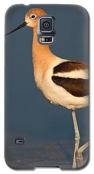 Galaxy S5 Case featuring the photograph American Avocet Standing Tall by Max Allen