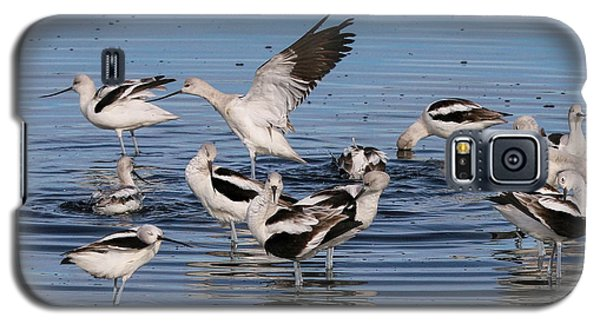 American Avocet's Taking A Break Galaxy S5 Case
